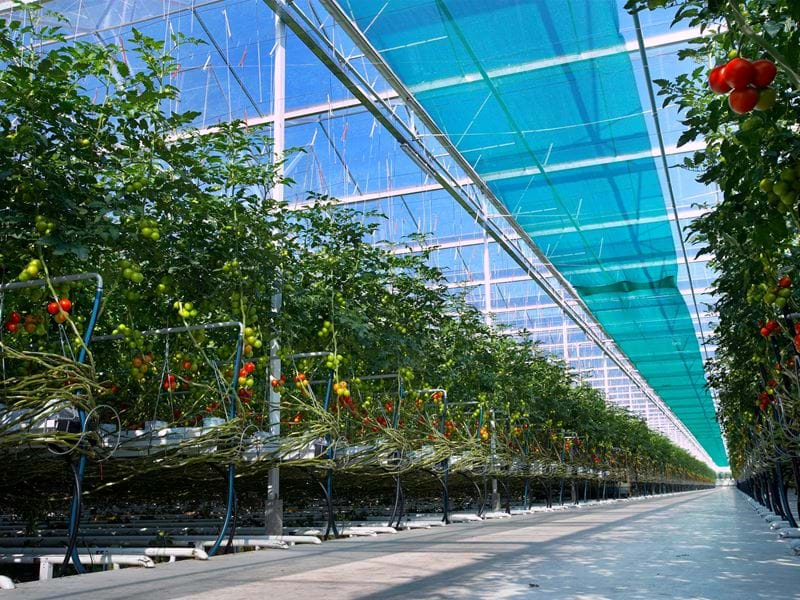 Greenhouse screen cloth - Gakon Horticultural Projects - Turn-key Greenhouse Projects