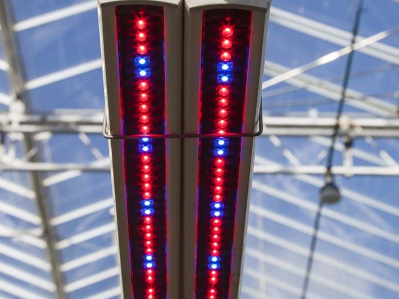 LED lighting - Gakon Horticultural Projects - Turn-key Greenhouse Projects