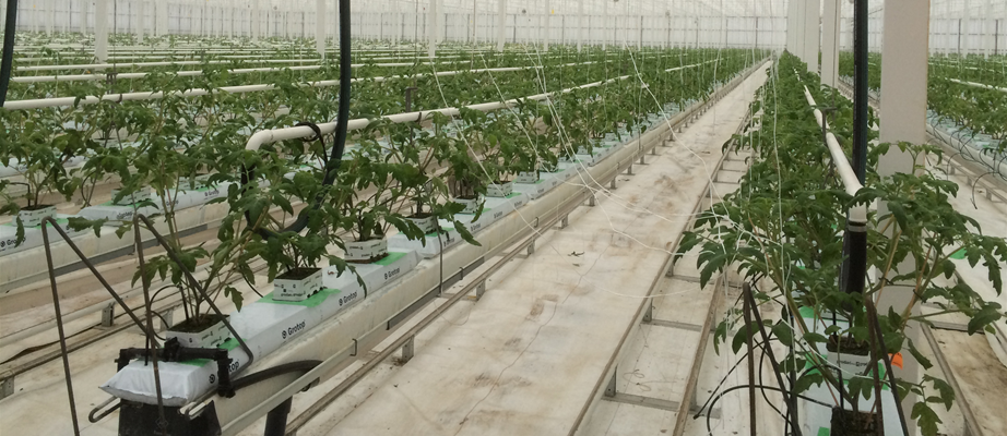 Rovak BVBA - Gakon Horticultural Projects - Turn-key Greenhouse Projects