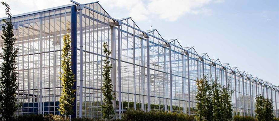 Hoogstraaten greenhouse - Gakon Horticultural Projects - Turn-key Greenhouse Projects