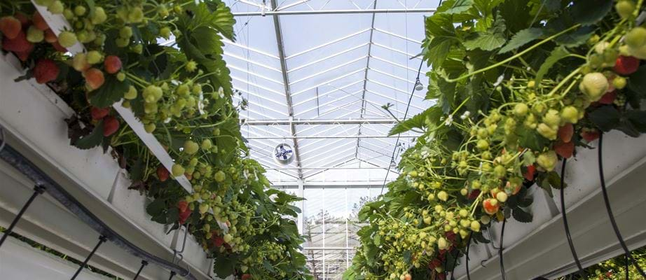Valstar Orchidee Naaldwijk climate technology - Gakon Horticultural Projects - Turn-key Greenhouse Projects