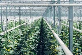 climeworks4 - Gakon Horticultural Projects - Turn-key Greenhouse Projects