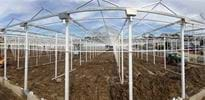 Beerstecher (3) - Gakon Horticultural Projects - Turn-key Greenhouse Projects