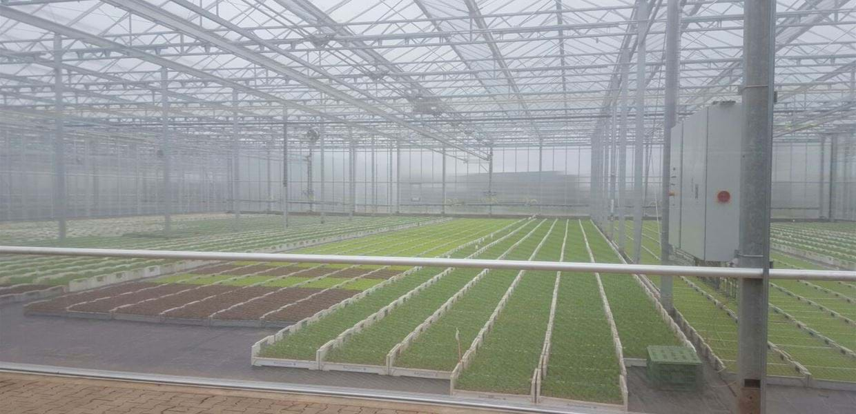 Beier Jungpflanzen (6) - Gakon Horticultural Projects - Turn-key Greenhouse Projects