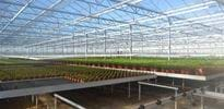 Freese Gartenbau (2) - Gakon Horticultural Projects - Turn-key Greenhouse Projects