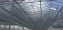 Fri Ell Greenhouse Phase I (4) - Gakon Horticultural Projects - Turnkey kassenbouwprojecten