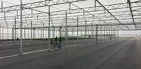 K und K Pflanzen 1 - Gakon Horticultural Projects - Turn-key Greenhouse Projects
