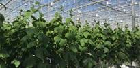 KGP Dnepr (2) - Gakon Horticultural Projects - Turn-key Greenhouse Projects