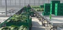 KGP Greenhouses project Dnepr