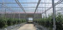 Lechner Gemüse GbR (1) - Gakon Horticultural Projects - Turn-key Greenhouse Projects