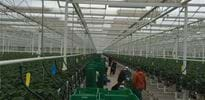 S_A (1) - Gakon Horticultural Projects - Turn-key Greenhouse Projects