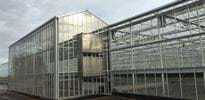S_A (4) - Gakon Horticultural Projects - Turn-key Greenhouse Projects