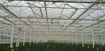 S_A (6) - Gakon Horticultural Projects - Turn-key Greenhouse Projects