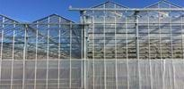 Scherr Jungpflanzen (2) - Gakon Horticultural Projects - Turn-key Greenhouse Projects