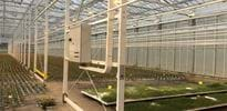 Scherr Jungpflanzen (5) - Gakon Horticultural Projects - Turn-key Greenhouse Projects