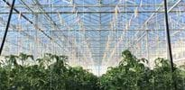 Sippel 3 - Gakon Horticultural Projects - Turn-key Greenhouse Projects