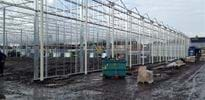 Solis plant (5) - Gakon Horticultural Projects - Turn-key Greenhouse Projects