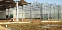 Agrokom (6) - Gakon Horticultural Projects - Turn-key Greenhouse Projects