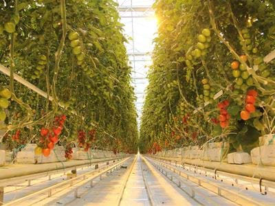 Eko Kultura for all projects (1) - Gakon Horticultural Projects - Turn-key Greenhouse Projects