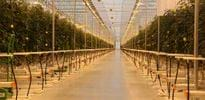 Eko Kultura for all projects (2) - Gakon Horticultural Projects - Turn-key Greenhouse Projects