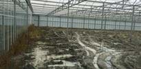 Gartenbau Klein (4) - Gakon Horticultural Projects - Turn-key Greenhouse Projects