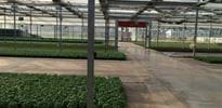 Simonato (4) - Gakon Horticultural Projects - Turn-key Greenhouse Projects